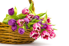 Colourful tulips in a basket Stock Images
