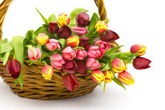 Colourful tulips in a basket Royalty Free Stock Photography