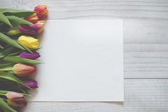 Colourful tulips on boards with a white sheet of paper. Royalty Free Stock Photos