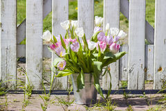 Colourful tulips in a bucket Stock Images