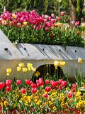 Colourful Tulips Growing in the back of a Truck royalty free stock photography