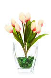 Colourful tulips isolated Royalty Free Stock Photos