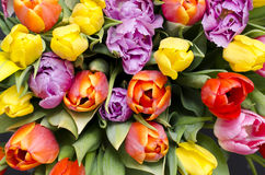 Colourful tulips from top. Bunch of tulips Stock Photos