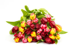 Colourful tulips Stock Photos