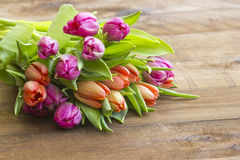 Colourful tulips Stock Photography