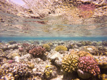 Colourful Underwater Coral Reef Stock Photos