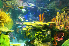 Colourful underwater scene Royalty Free Stock Image