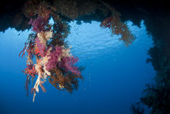 Colourful Underwater Tropical Coral Reef Scene. Royalty Free Stock Photography