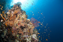 Colourful Underwater Tropical Coral Reef Scene. Stock Photo