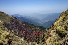 Colourful Valley seen from Tungnath Peak, Garhwal, Uttarakhand, India royalty free stock photo