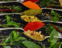 Colourful various herbs and spices for cooking on dark background royalty free stock image
