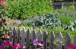 Colourful vegetable garden Stock Images