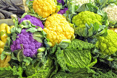 Colourful vegetables from autumn harvest Stock Images