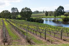Colourful vineyard in Perth stock photo