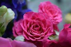 Colourful wiązka Fotografia Stock