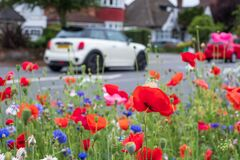 Colourful wild flowers, including pink poppies and cornflowers, on a roadside verge in Eastcote, Hillingdon, UK