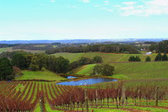 Colourful wine orchad in Adelaide Hills Stock Photos