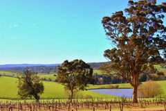 Colourful wine orchad in Adelaide Hills Royalty Free Stock Photos