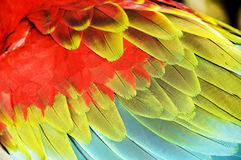 Colourful wings of macaw. Close up colourful wings of macaw Royalty Free Stock Photo