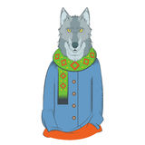 Colourful winter wolf Stock Photography
