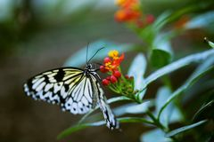 Colourful world. Butterfly sitting on a flower Stock Images