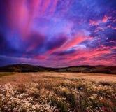 Colourful wschód słońca nad kwitnąć łąki Obrazy Stock