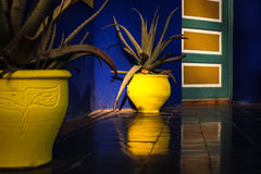 Colourful yellow flower pots. In the jardin majorelle in marrakesh morocco with reflection of door Stock Photos