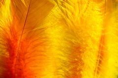 Colourful easter feathers in sunlight Stock Photos