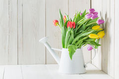 A colourful and young tulip. On a white table Royalty Free Stock Image