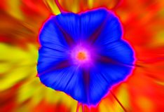 ABSTRACT ZOOM BLUR OF FLOWER Stock Photo