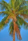 Colourfull椰子 图库摄影