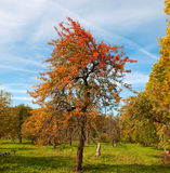 Colourfull autumn tree Stock Image