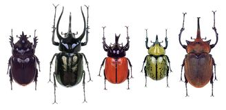 Colourfull Beetles Royalty Free Stock Photography