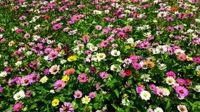 Colourfull blommor Arkivbild