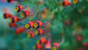 Colourfull blossom in art deco grow house royalty free stock photo