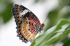 A colourfull butterfly. Stock Image
