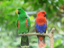 Colourfull Creatures royalty free stock images