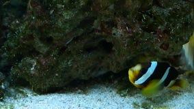 Colourfull fishes in aquarium