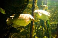Colourfull fiskar i mörkt djupt vatten Arkivfoto
