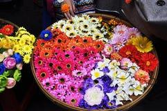 Colourfull flowers Stock Image
