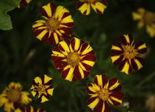 Colourfull flowers with yellow and red royalty free stock photos