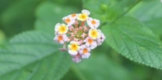 Colourfull lös blomma Royaltyfri Bild