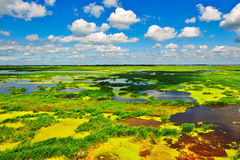 The colourfull marsh Royalty Free Stock Images
