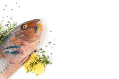 Colourfull Parrotfish with lemon and herbs