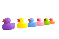 Colourfull Rubber Ducks Stock Image