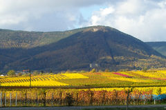 Colourfull wineyards. Wineyards full of light and colour, Germany Royalty Free Stock Photos