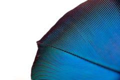 Colourfullveer van papegaai Stock Afbeelding
