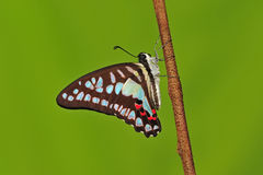 Butterfly. Colourfully butterfly stay on branch royalty free stock image