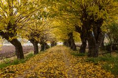 Colours of Abruzzo in Autum. Autumn Abruzzo - clours leave yellow and green Royalty Free Stock Images
