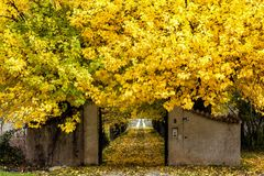 Colours of Abruzzo in Autumb. Autumn to Abruzzo - Colours leaves yellow Royalty Free Stock Photos